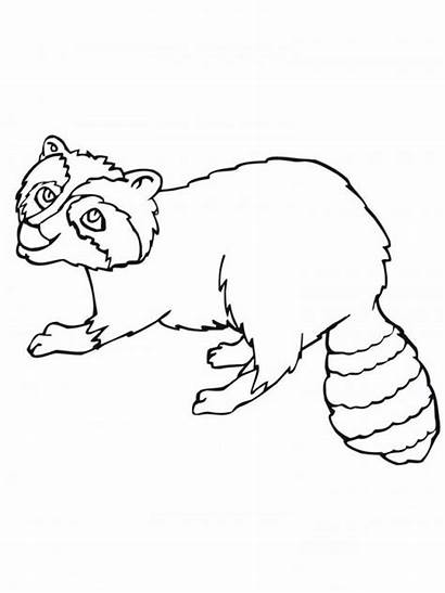 Raccoon Coloring Pages Printable Popular Bag Getcoloringpages