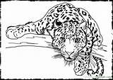 Leopard Print Coloring Pages Printable Getcolorings sketch template