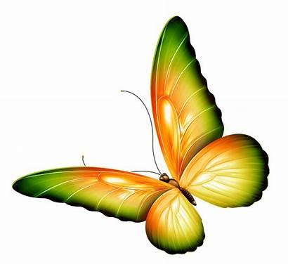 Border Clipart Butterfly Flowers Butterflies Transparent Yellow