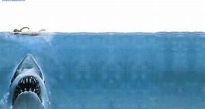 Awesome Funny Shark HD Wallpaper - WallpaperSafari
