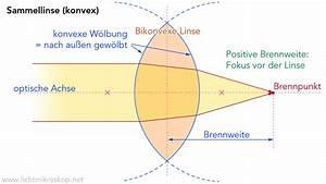 Konvex Konkav Berechnen : wie funktioniert ein mikroskop funktion lichtmikroskop ~ Themetempest.com Abrechnung