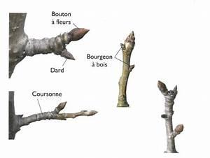 Comment Tailler Un Pommier : arbres fruitiers le jardin d 39 yvonne ~ Dode.kayakingforconservation.com Idées de Décoration