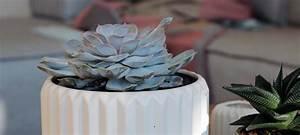 Sukkulenten Deko Sukkulenten Deko Ideen Bringen Eine Grne