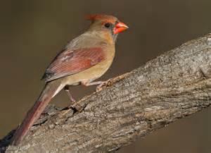 small backyard birds