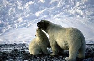 Stop Oil Company from Drilling in the Arctic Ocean ...