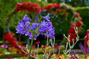 Acheter Des Plantes : fleurs et jardins acheter des plantes pas cher maison retraite champfleuri ~ Melissatoandfro.com Idées de Décoration