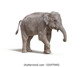 white elephant images stock  vectors shutterstock