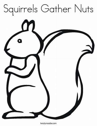 Coloring Nuts Squirrels Gather Squirrel Template Noodle