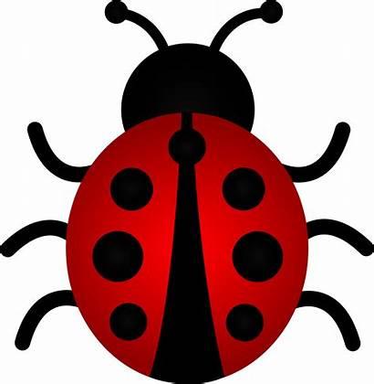 Clip Bug Lady Ladybug Drawing Clipart Border