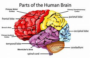 Part  Part Of Brain That Controls Memory
