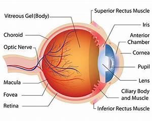 Associated Retina Consultants