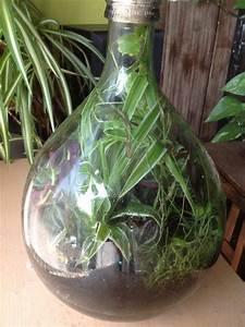Pflanze In Flasche : biosph re archives dennis deutschmann bloggt ~ Whattoseeinmadrid.com Haus und Dekorationen