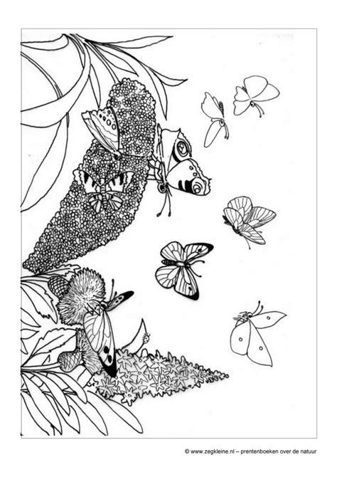 Vlinder Kleurplaat Peuters by Zeg Kleine Vlinder Prentenboek Voor Peuters En Kleuters