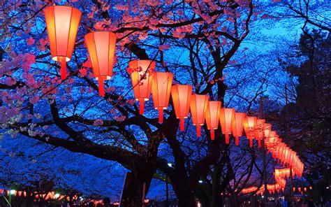 sakura season    capture japans cherry