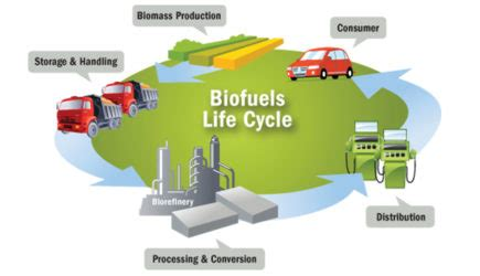 Biofuels Breaking Down Stubborn Cellulose Justscience