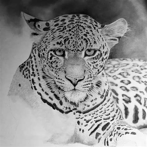 gallery de ceylon hyper realistic animal drawing