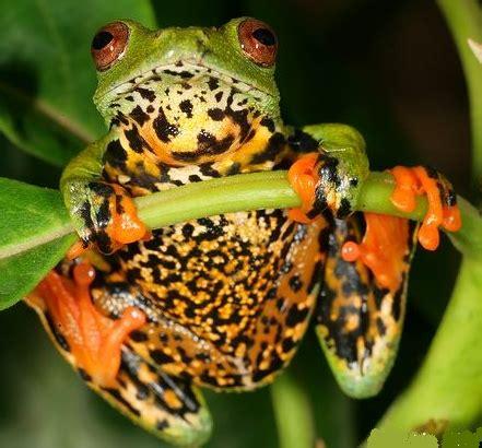 Endangered Frog Species