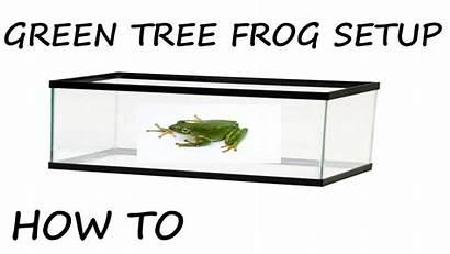 Frog Tree Enclosure Setup