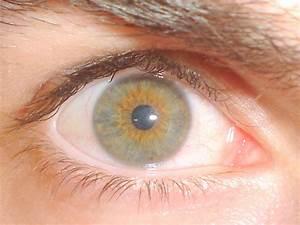 File:Hazel eye (1).jpg