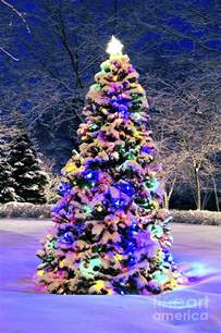 christmas tree in snow photograph by elena elisseeva