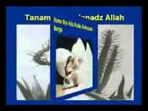 Keajaiban-Keajaiban ALLAH SWT Di Dunia.3GP - YouTube