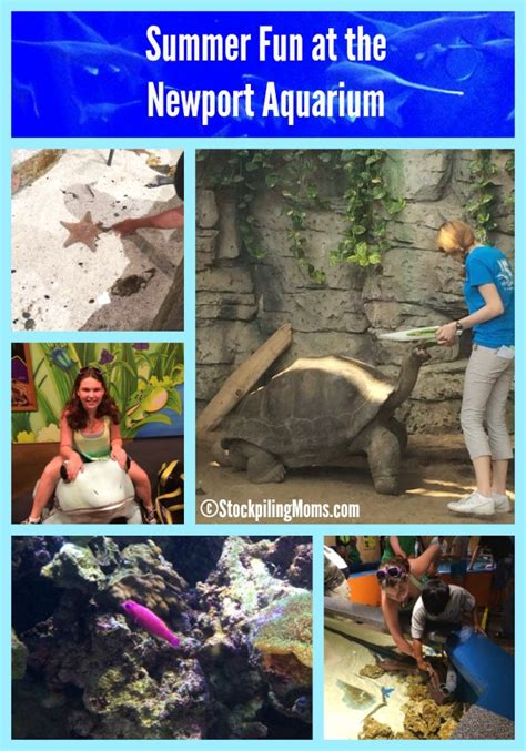 newport aquarium summer family hours