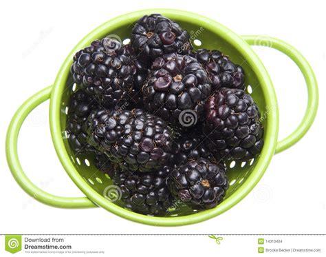 fresh blackberries fresh healthy blackberries stock images image 14310404