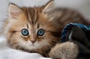 world s cutest cat cutest kitten in the world with cats