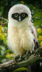 1000+ images about Owls Big and Small on Pinterest | Owl ...