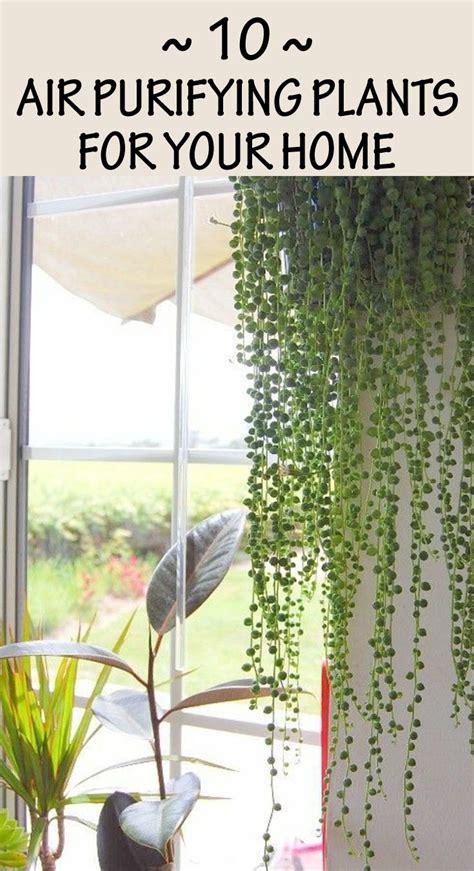 air purifying plants   home gardentipzcom