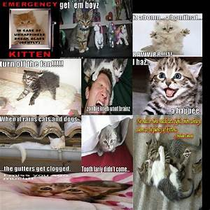 Funny Kitten Sayinz from ShaaKiera