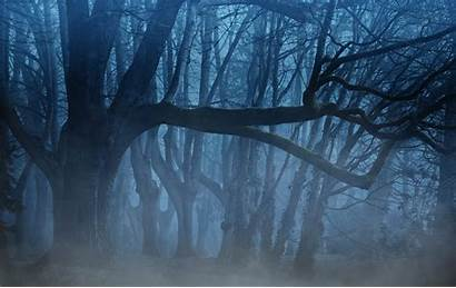 Forest Dark Scary Wallpapers Tree Winter Lots