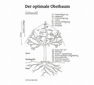 Kirschbaum Richtig Schneiden : obstbaum schneiden obst ~ Frokenaadalensverden.com Haus und Dekorationen