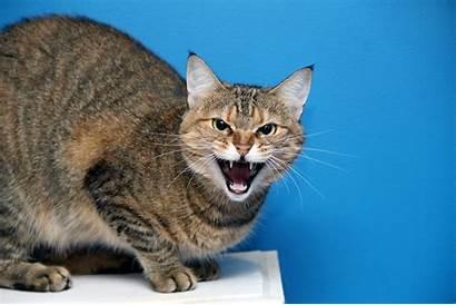 Cat Evil Sitting