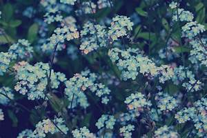 blue flowers nature forget-me-not sci-universe •