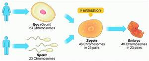 The Sexual Reproduction Is A Source Of Genetic Variations