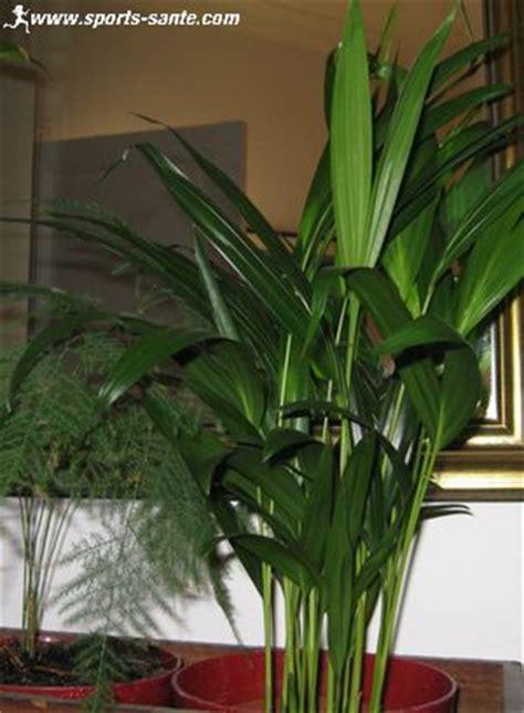 grande plante interieur pas cher