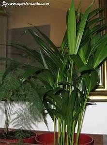 Assainir L Air De La Maison : les plantes d polluantes d 39 int rieur pour assainir l 39 air ~ Zukunftsfamilie.com Idées de Décoration