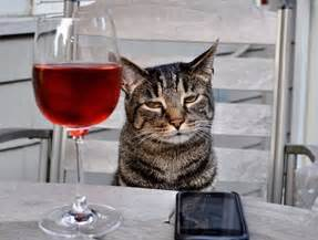 cat wine top 10 images of cats wine