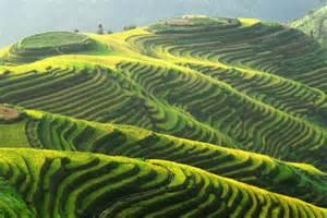 Longsheng Rice Terrace China