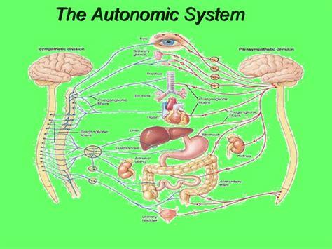 autonomic nervous system ppt