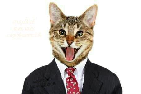 vire cat omg si compartes esta foto de un gato con un traje