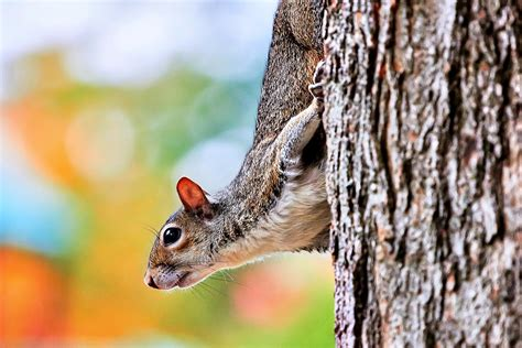 Rainbow Animal Wallpaper - rainbow squirrel wallpaper animals wallpaper better