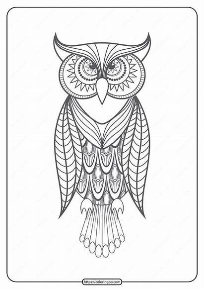 Coloring Printable Owl Pdf Animals Pages
