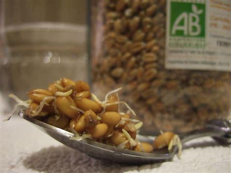comment cuisiner le blé faire germer blé avec ou sans germoir cuisine