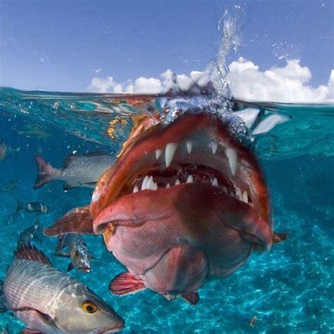 12 Best Images About Unique Sea Creatures On Pinterest
