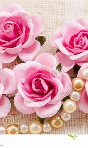Pink rose with pearls. stock image. Image of love ...