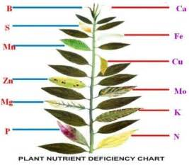 Aquarium Plant Diseases