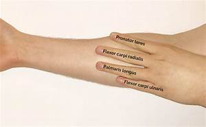 Muscles of the Anterior Forearm | Anatomy | Geeky Medics  Superficial