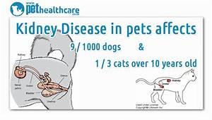 kidney failure in dogs symptoms